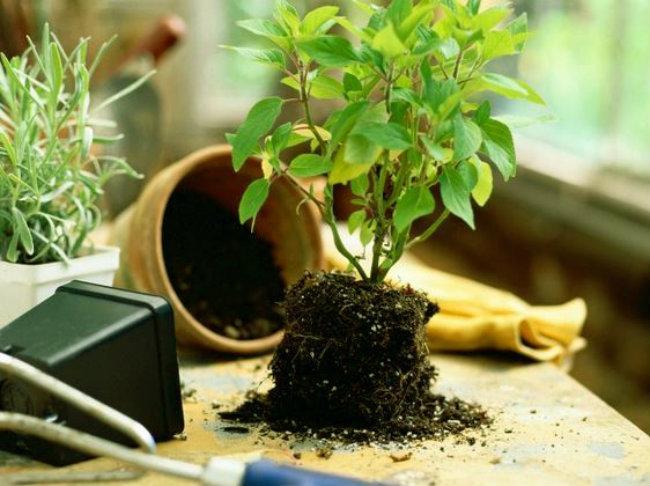Chuẩn bị gì trước khi trồng cây ?