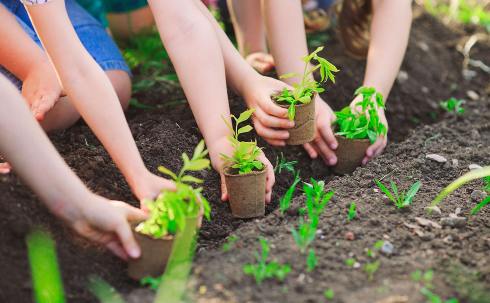 Các bước trồng cây