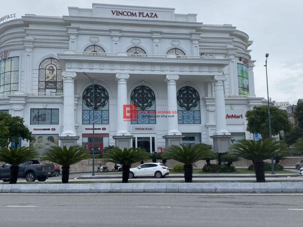 du-an-thi-cong-cay-xanh-vincom-plaza-ha-long-cayxanhhoanggia